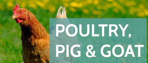 Poultry, Pig & Goat